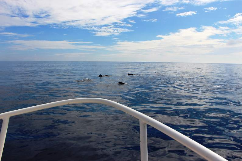 Friendly dolphins seen while out on the boat with Deco Stop Lodge