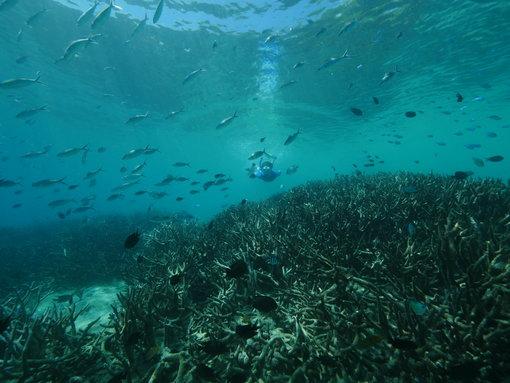 There are so many fish to be seen when snorkelling around Espiritu Santo Vanuatu