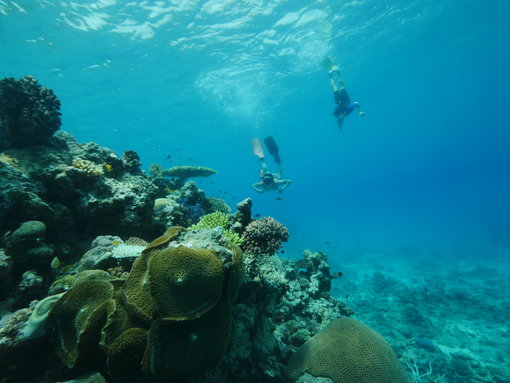 Beautiful corals and plenty of fish around Espiritu Santo, Vanuatu