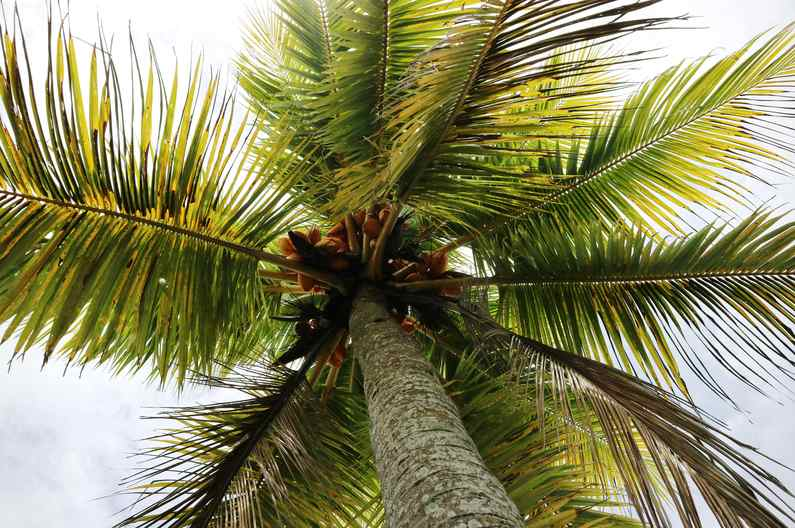 Coconut palm at Deco Stop Lodge