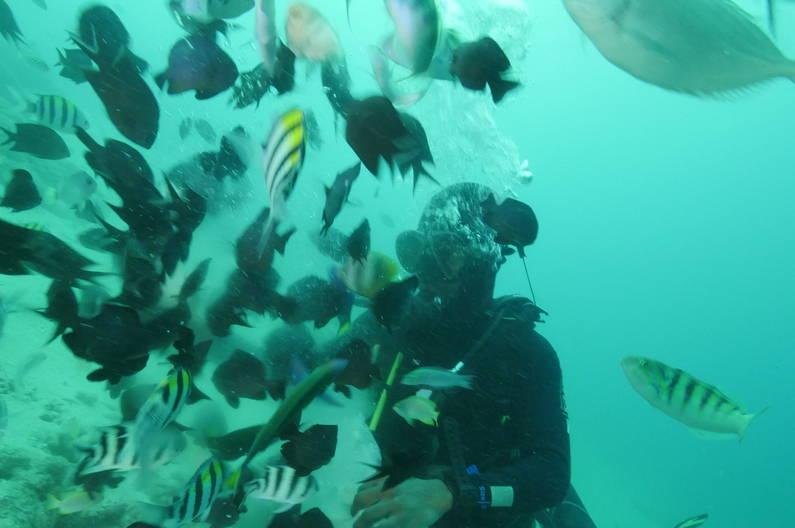 Feeding fish whilst diving, Espiritu Santo, Vanuatu